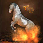 Carriage Of Fire - Tobiano - HEE Collection
