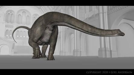Diplodocus animation by Joel Anderson