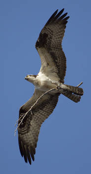 Osprey home improvement