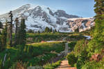 Going to Mount Rainier