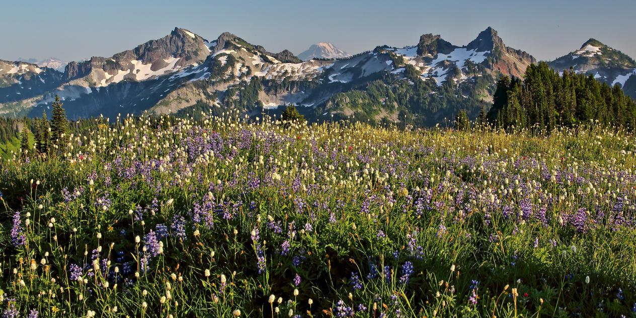 Mount Adams from Mount Rainier Park by arnaudperret