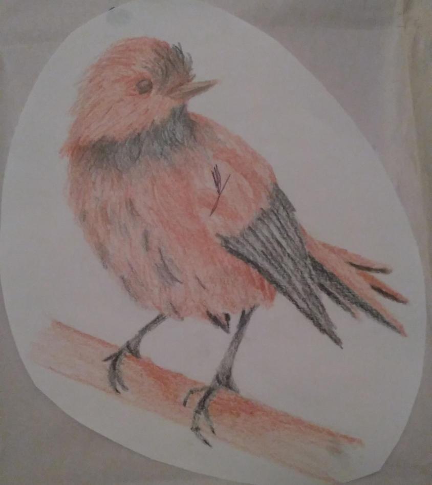 Bird Sketch by xx-StarrySkies-xx