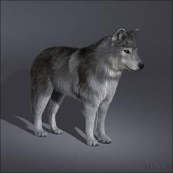 3D gray wolf model 2