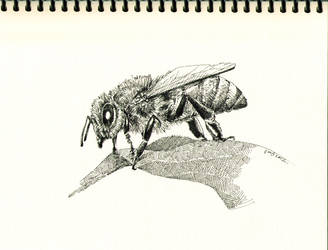 A Bee by solublepop
