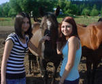 me melody and the horses