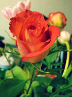 Rose by kgpanelo