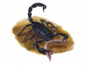 Neoscorpius longipes by Spinosaurus1915