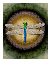 Dragonfly by Crescent-Studio