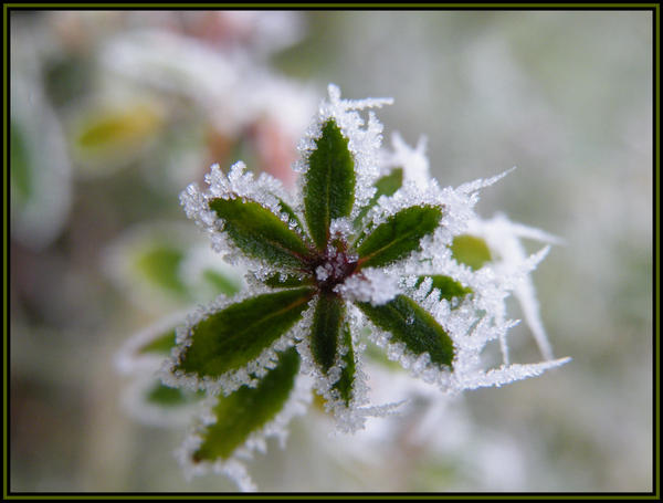 Frost Collection One by Olcanna