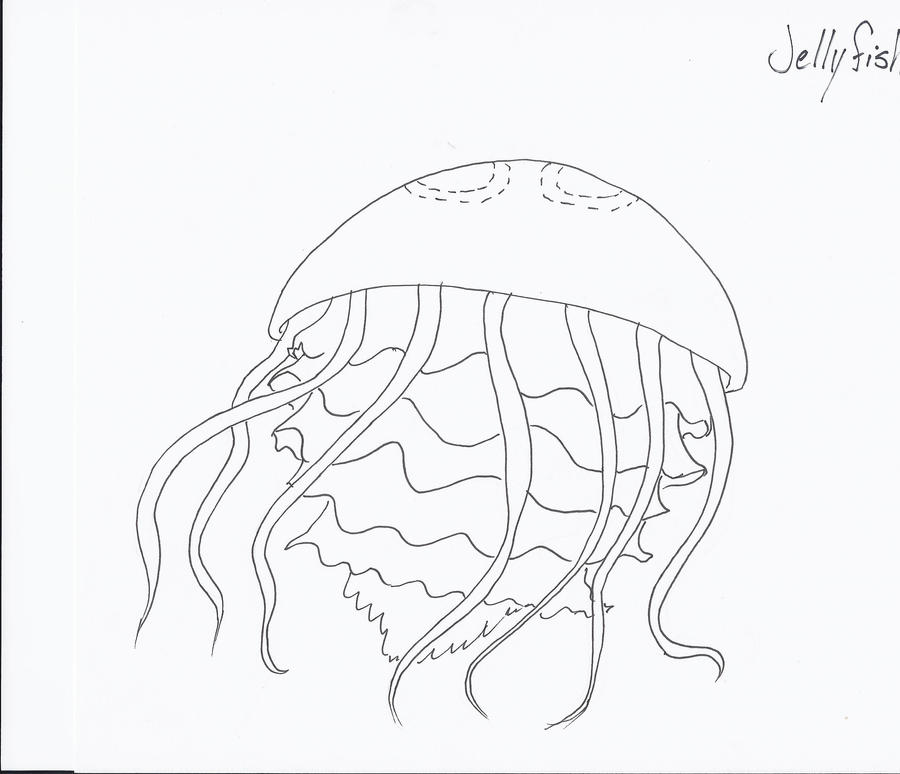 Jellyfish Drawing Color Color me in Jellyfish by