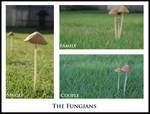 The Fungians