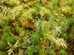 Moss in Temperate Forest by Pauletta90