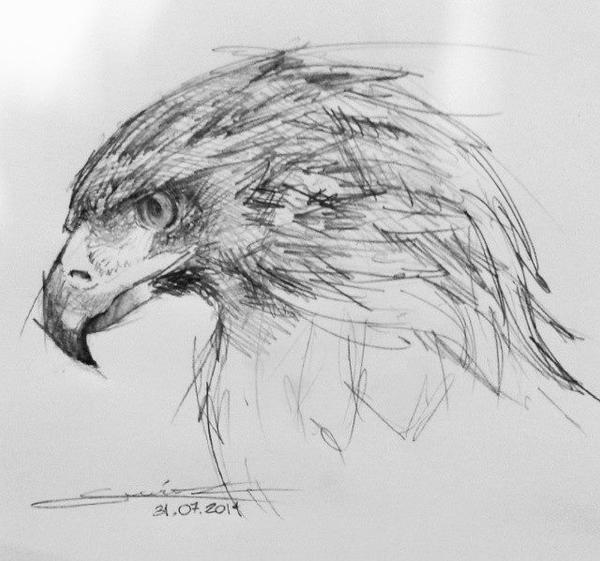 Eagle head study by Acousticletters