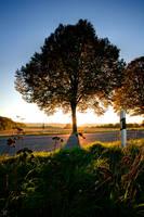 behind the tree by Lunox-baik
