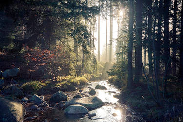 forest scenery by Lunox-baik