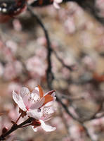 The Edge of Spring by kradtke