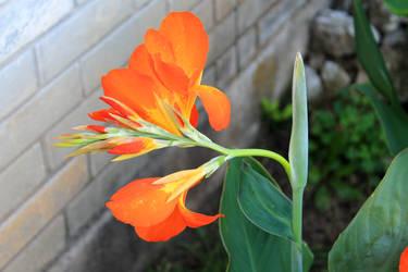 Orange tinted summer