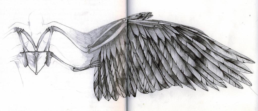 Angel Wing Diagram By Alicjajar On Deviantart