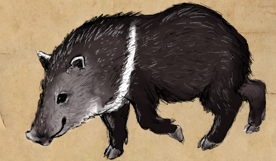 Collared Peccary by painted-flamingo