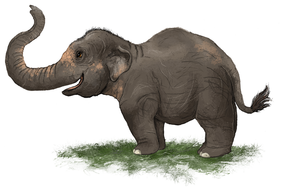 Asian Elephant by painted-flamingo on DeviantArt