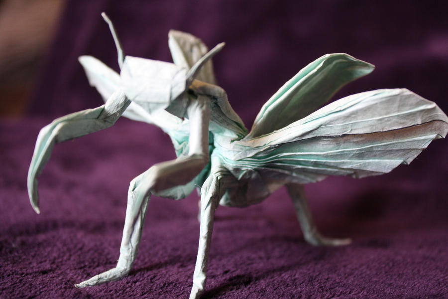 Praying Mantis by JBarr4