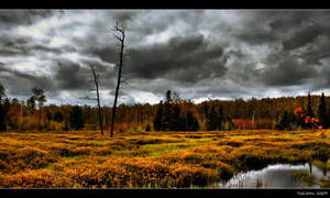 Off Trail One - Swamp