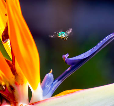 Green Bee 2