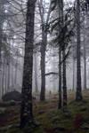 Misty Forest Stock II