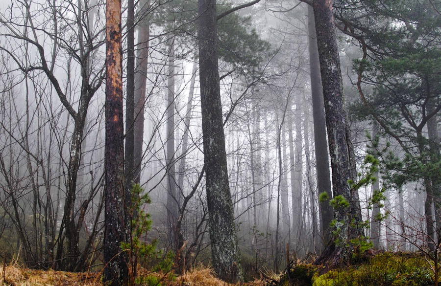 Misty morning by Angband