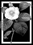 Black and White Flower Left