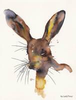 Hare by LadyTinuz