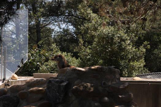 Otter - What lies beyond ?