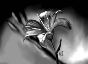 Lily by WisteriaBreeze