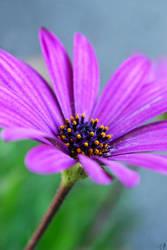 Zest by HappilyInsane by flower-club