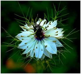 Allure by adeb1113 by flower-club