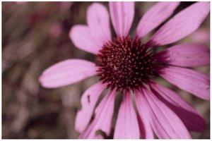 falls violet by Photograph-er