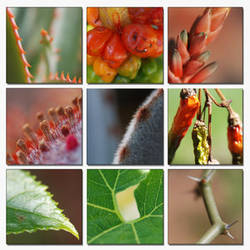 Botanic Set by Rmwilliam by flower-club