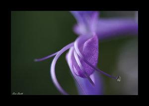 Purple daze by engridearty by flower-club