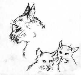 Ashfur, Jayfeather and Lionblaze