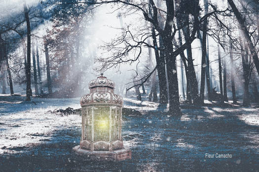 Light in the Cold