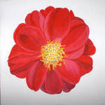 Perpetual Rose / Rosa perpetua