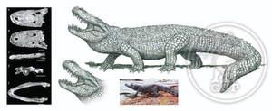 Purusaurus mirandai to Venezuela by dopellgersec