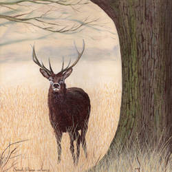 The Buck Stops Here by Sarah-Diane