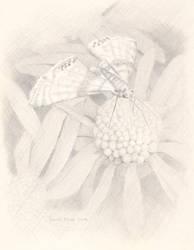 Little White Lichen by Sarah-Diane