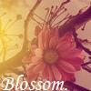 Blossom. by samentha17