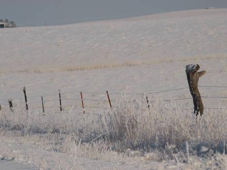 snowy fence 21