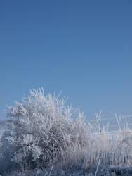 snowy winter bush fence