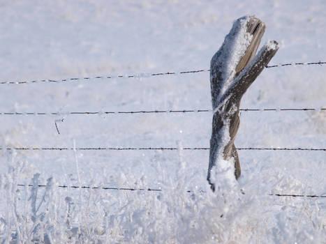 snowy fence 24
