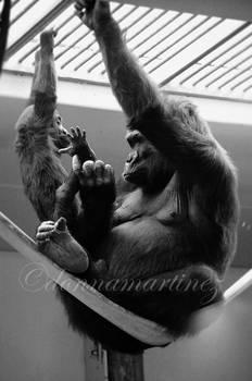 Motherly Gorilla