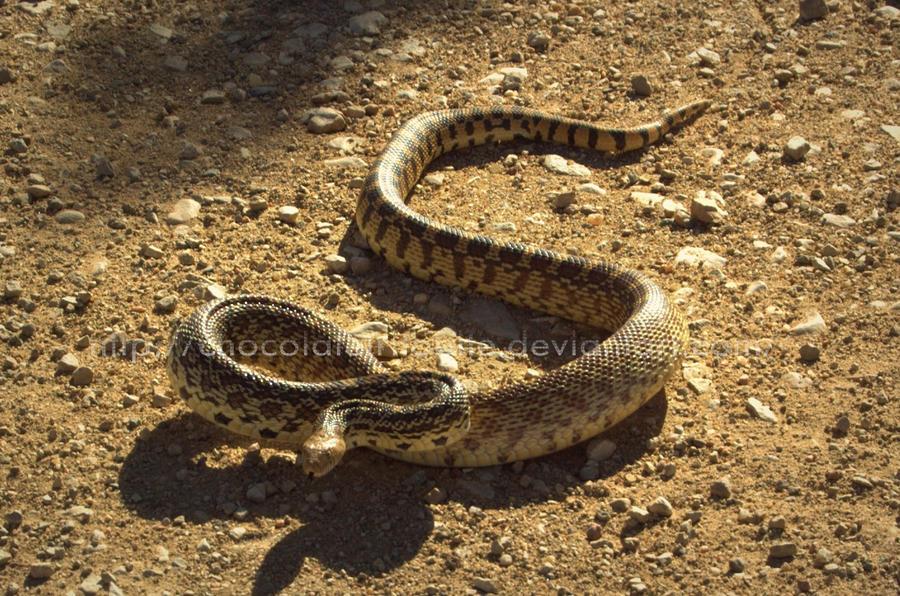 Snake trap art http www pic2fly com snake trap art html